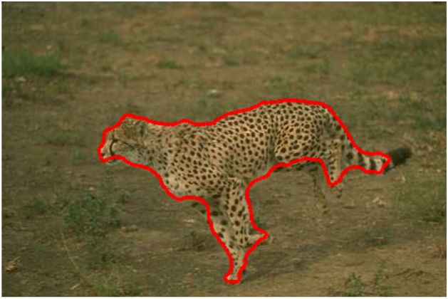 Leopard detected and bounded in red boundary